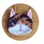 กระเป๋าสะพายโซ่น้องแมว 3มิติ thumbnail 2